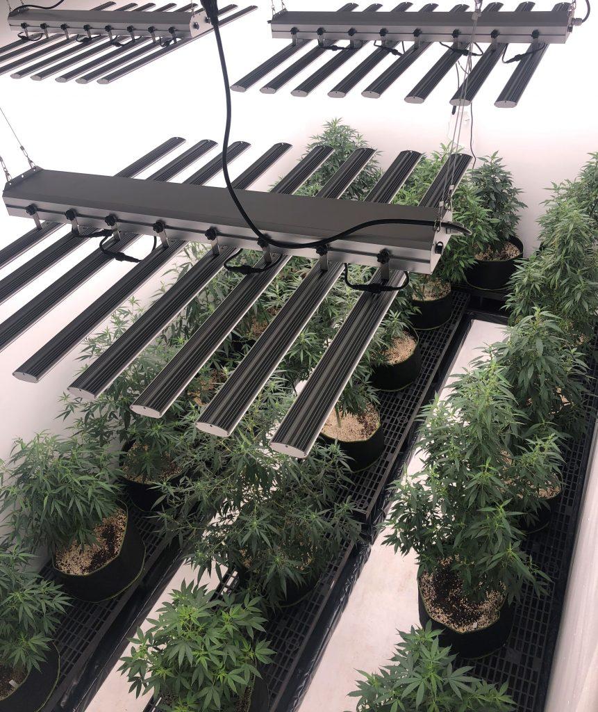 Agrozen Life Sciences R&D Cultivation Center